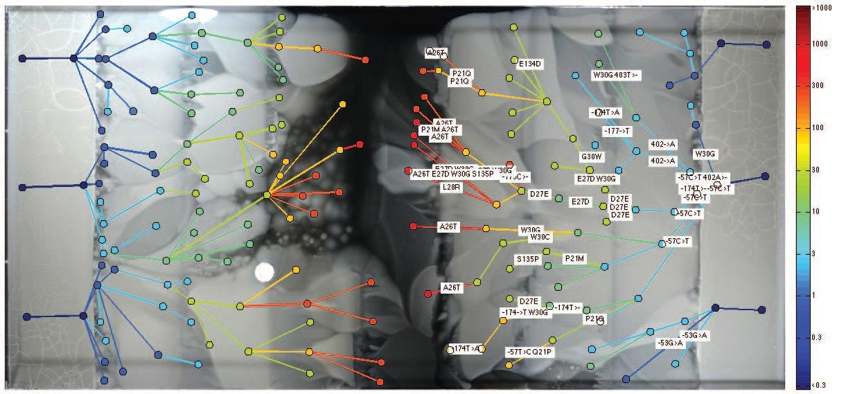 Экспансия фронта бактерий по арене с антибиотиками: зрелищный эксперимент Гарвардской медицинской школы - 4