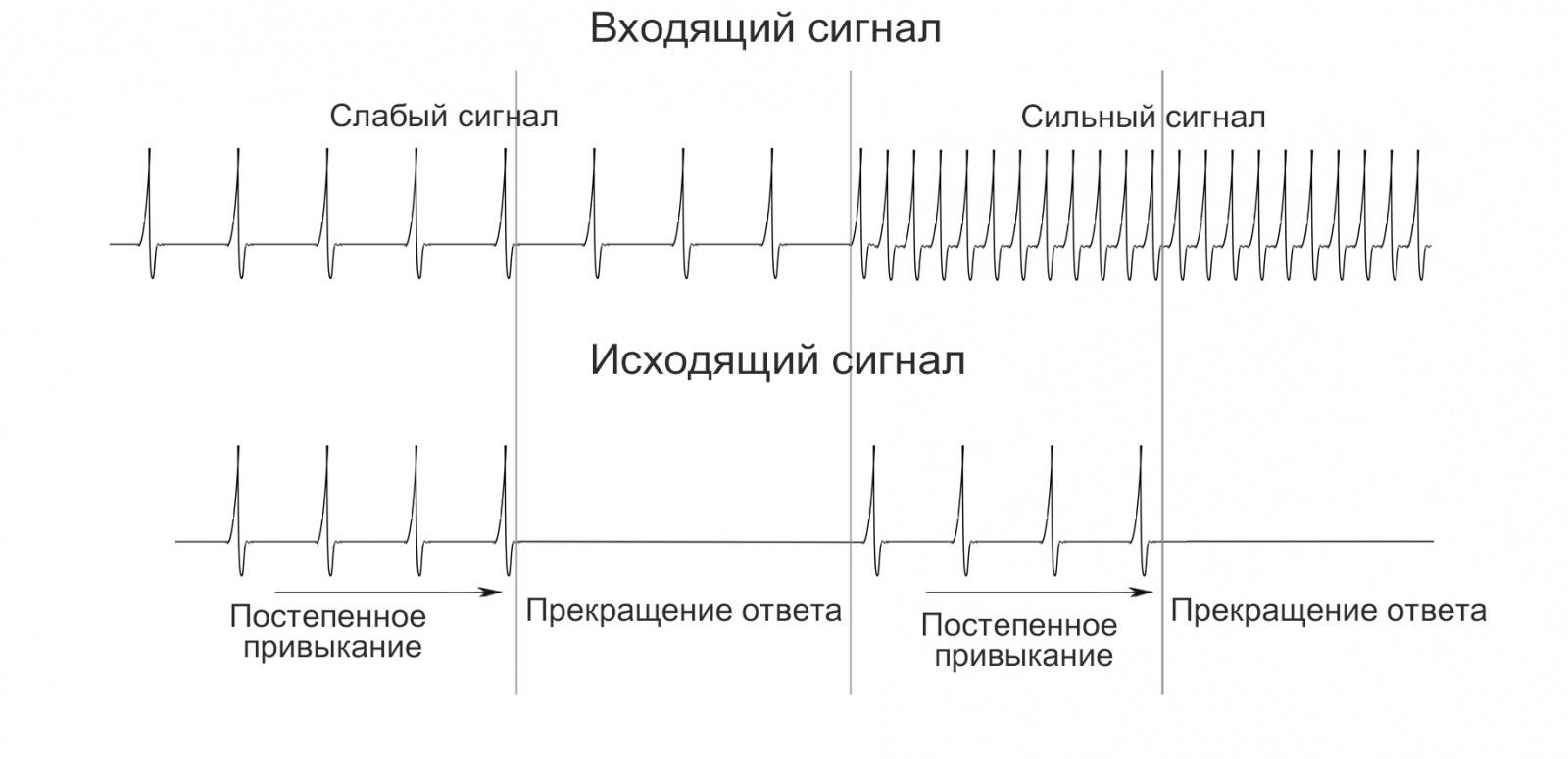 Симулятор нервной системы. Часть 2. Модулируемый нейроэлемент - 5