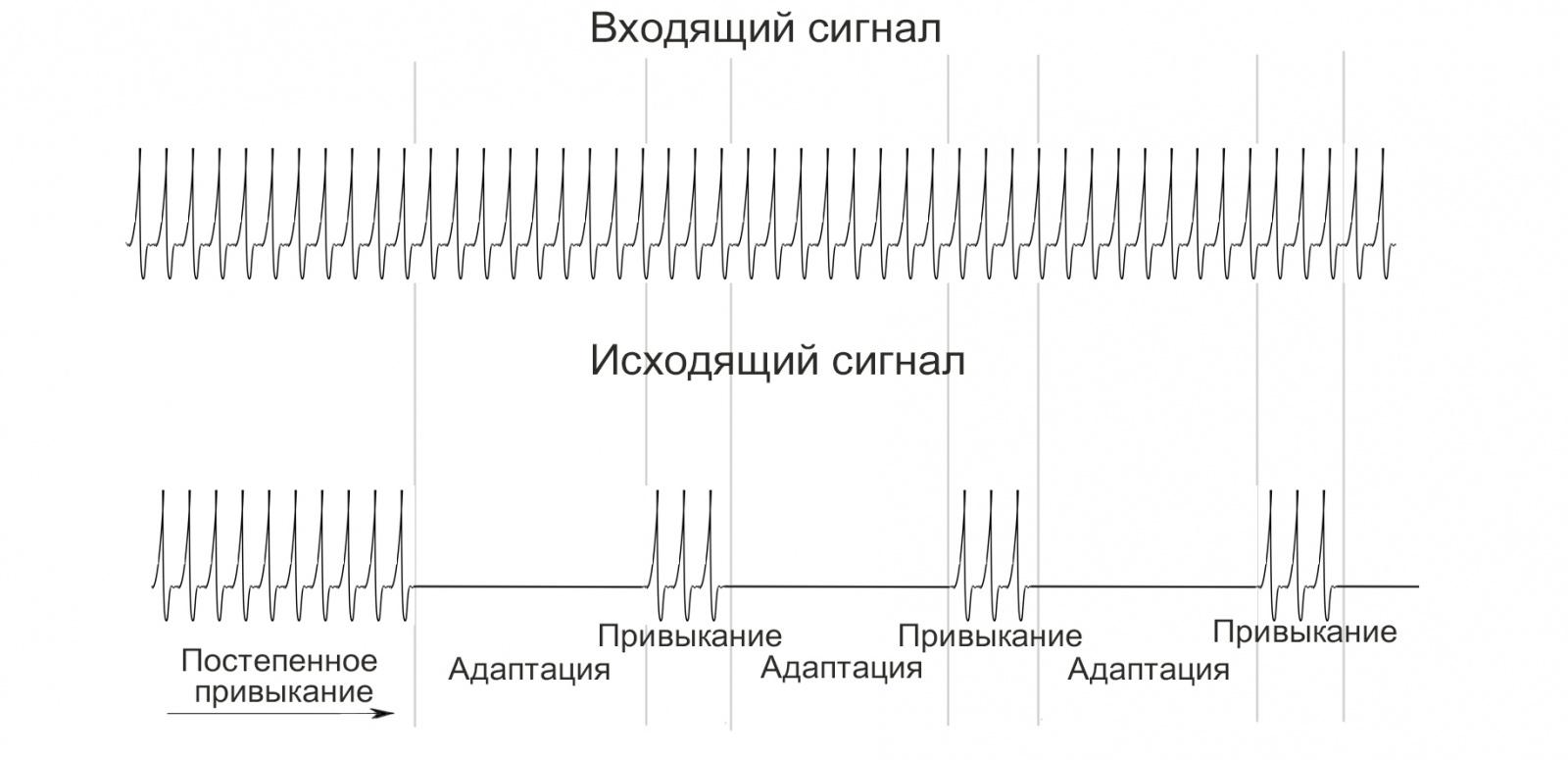 Симулятор нервной системы. Часть 2. Модулируемый нейроэлемент - 7