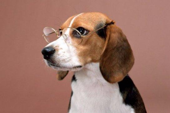 Собаки определяют рак точнее, чем современная техника