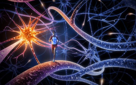 Ученые определили, какими нейронами человек принимает решения