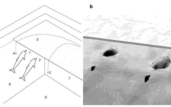 Анализ акустических сигналов дельфинов-афалин показал возможное наличие у них развитой разговорной речи - 2