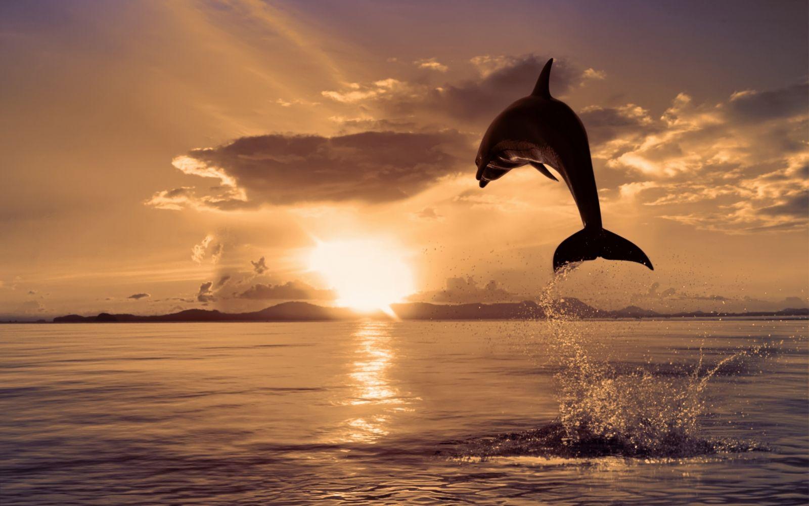 Анализ акустических сигналов дельфинов-афалин показал возможное наличие у них развитой разговорной речи - 1