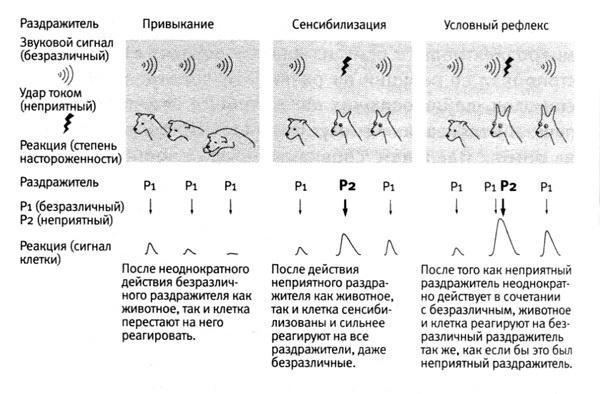 Симулятор нервной системы. Часть 3. Ассоциативный нейроэлемент - 2