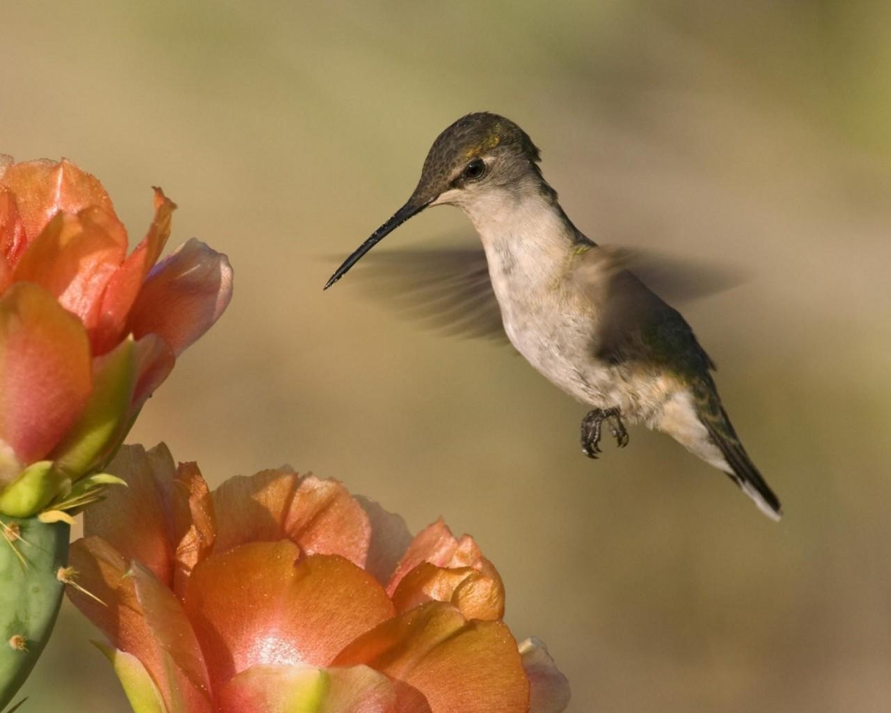 Физика в мире животных: колибри и ее полет - 2