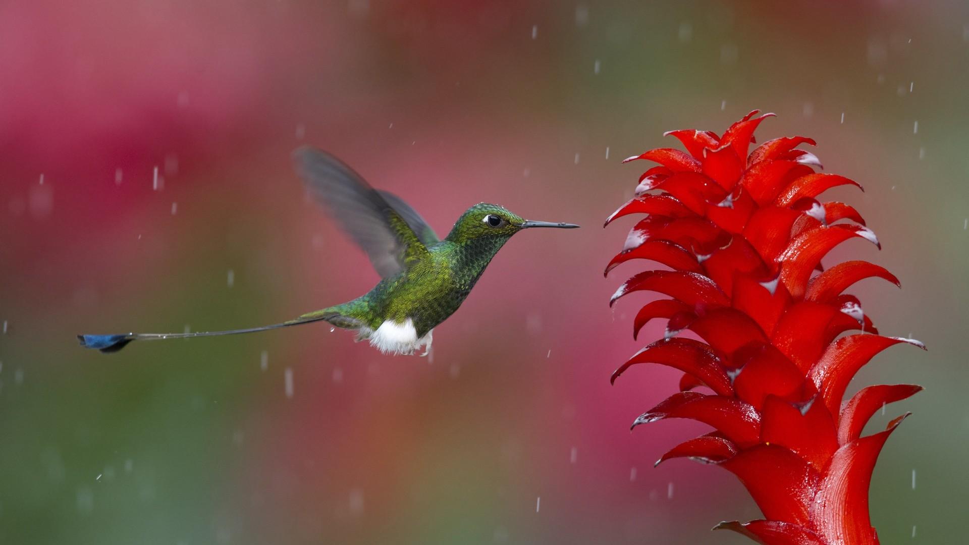 Физика в мире животных: колибри и ее полет - 4