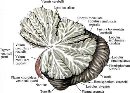 Логика сознания. Часть 6. Кора мозга как пространство вычисления смыслов - 6