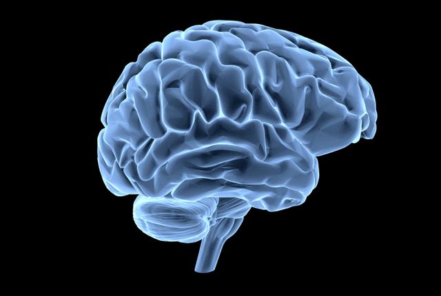 Логика сознания. Часть 6. Кора мозга как пространство вычисления смыслов - 1