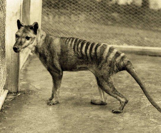 В Австралии нашли животное, которое считалось вымершим