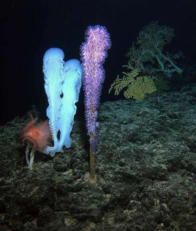 Подводные вулканы — оазис в глубоководном мире - 3