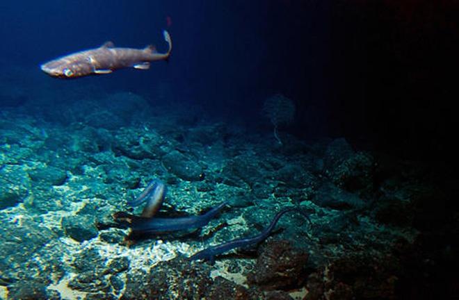 Подводные вулканы — оазис в глубоководном мире - 4