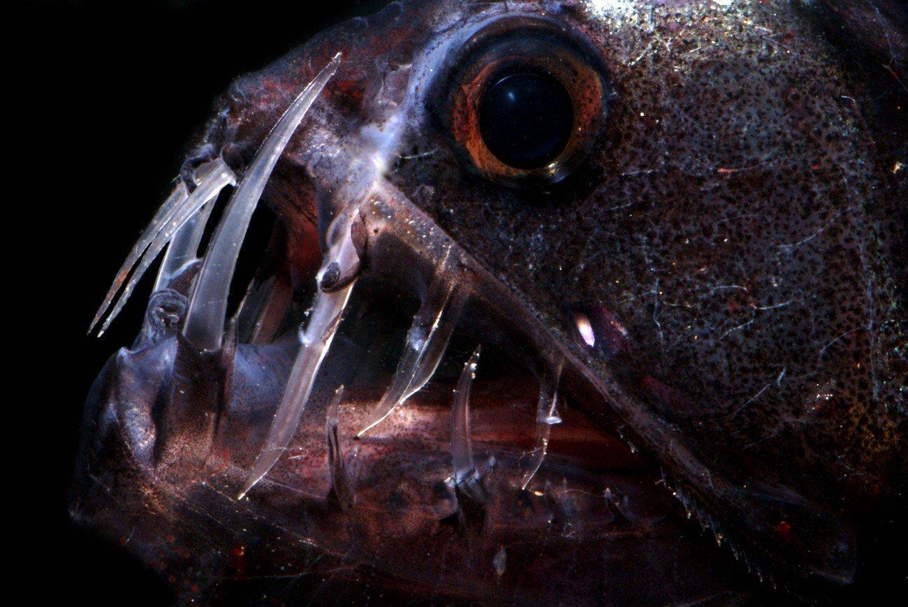 Подводные вулканы — оазис в глубоководном мире - 5