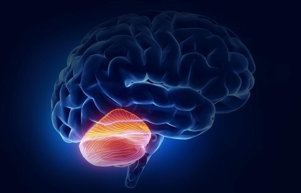 Удивительный мозжечок - 1