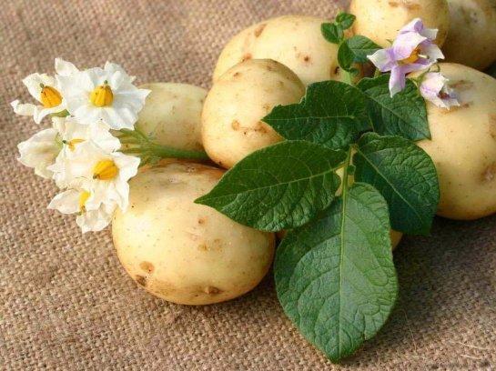 Картофель из Онтарио подходит диабетикам