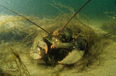 Физика в мире животных: омар и его глаза - 5
