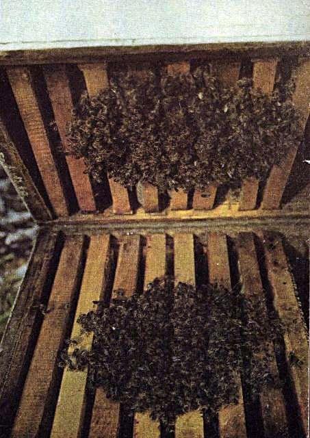 Почему пчел так много? - 2