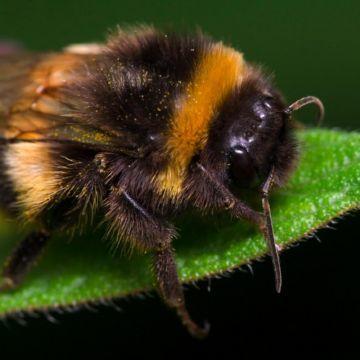 Почему пчел так много? - 3