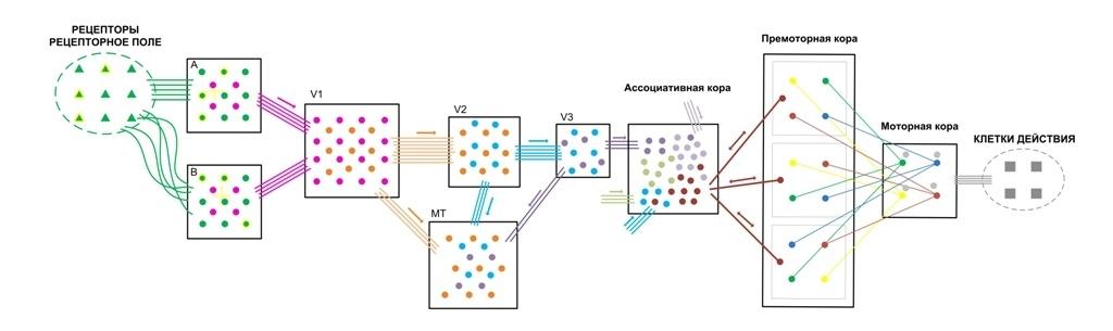 Структура и стартовые настройки мозга - 11