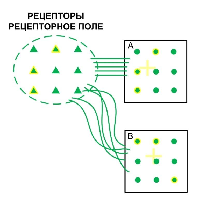 Структура и стартовые настройки мозга - 12