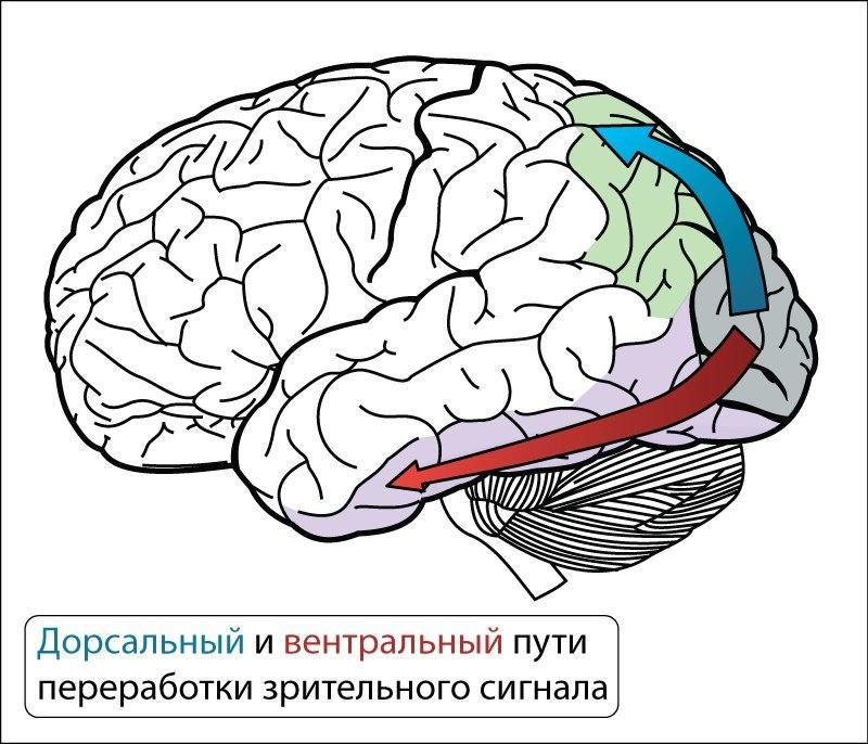 Структура и стартовые настройки мозга - 13