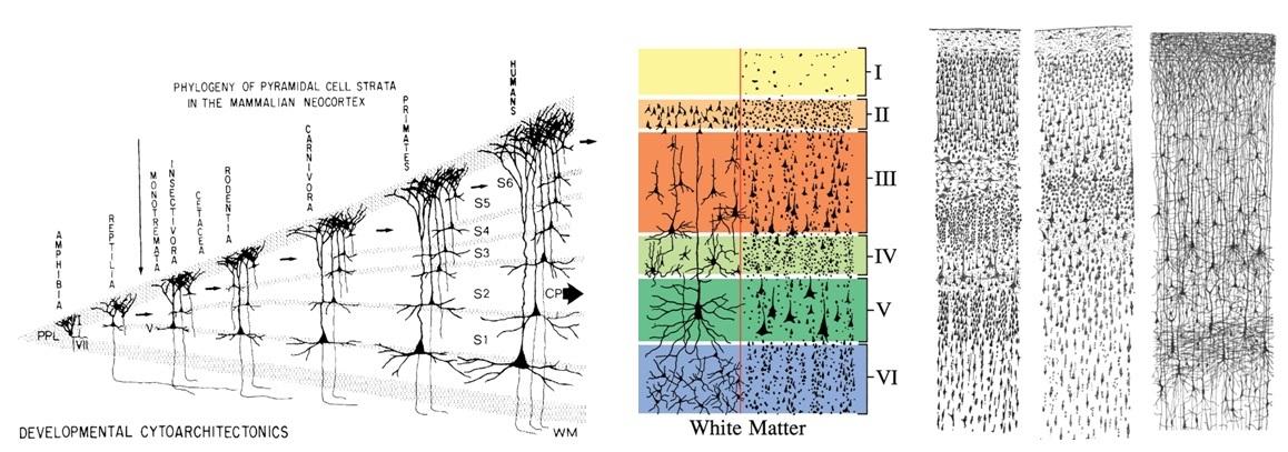 Структура и стартовые настройки мозга - 2