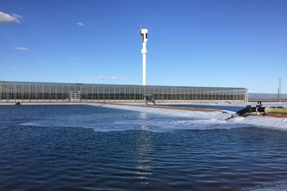 Первая в мире гидропонная солнечная ферма: морская вода + солнечный свет=помидоры - 4