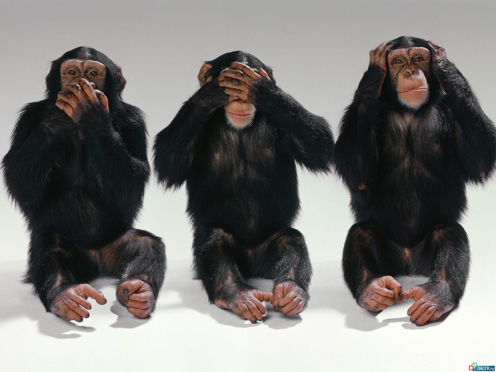 Подобно людям, обезьяны способны угадать, о чём думают сородичи - 1