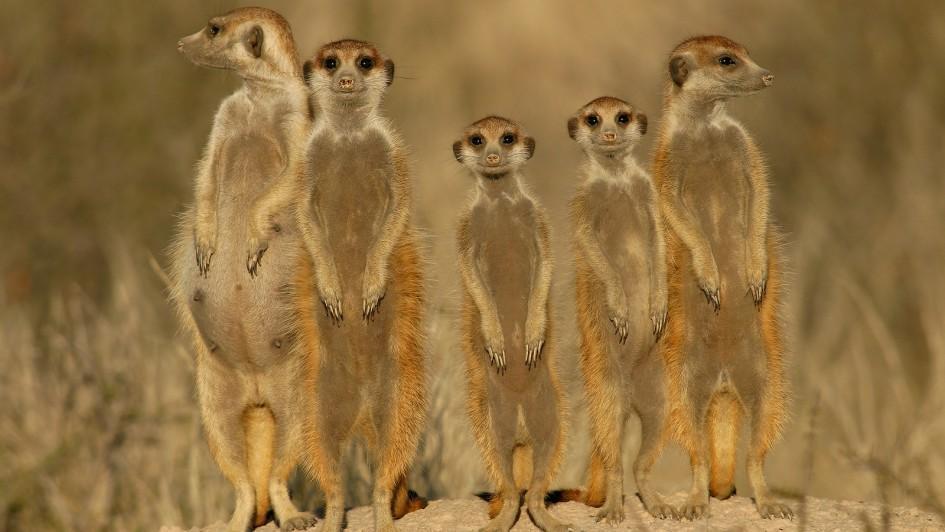 Убийство сородичей — устаревшая эволюционная стратегия - 1