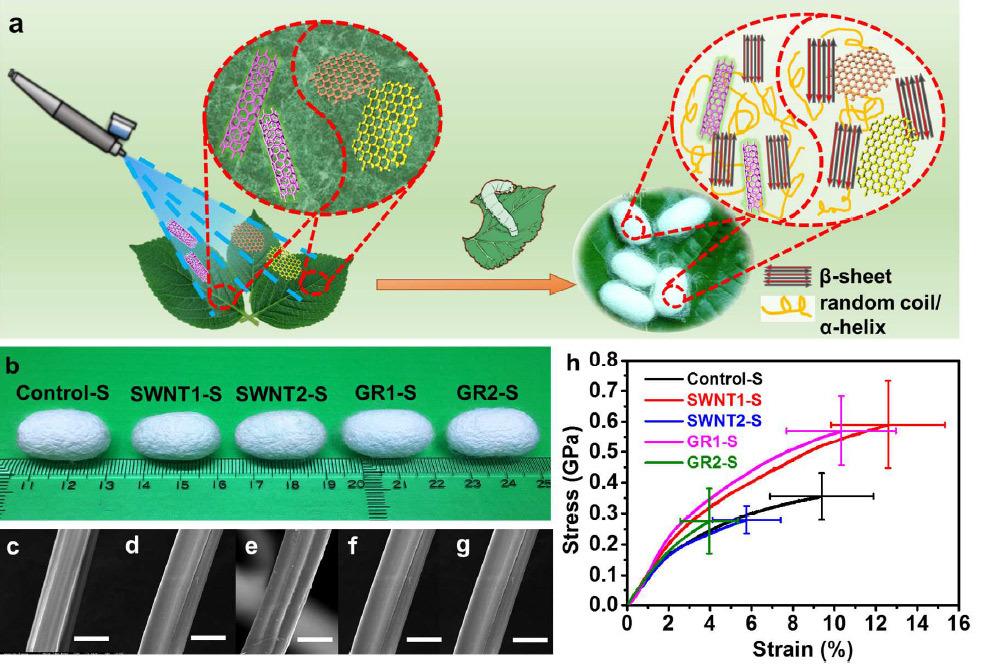 Шелкопряды съели графен и сделали шёлковую нить, которая проводит электричество - 2
