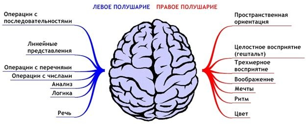 Левши — самое многочисленное «меньшинство» планеты - 2