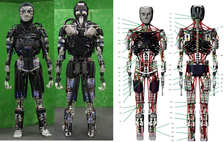 Японский робот Kengoro «потеет» при физической нагрузке - 1