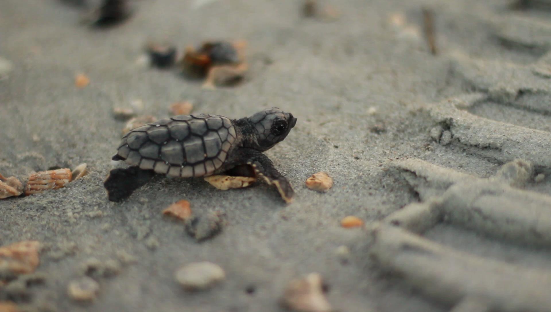 Физика в мире животных: морские черепахи и их «компас» - 3