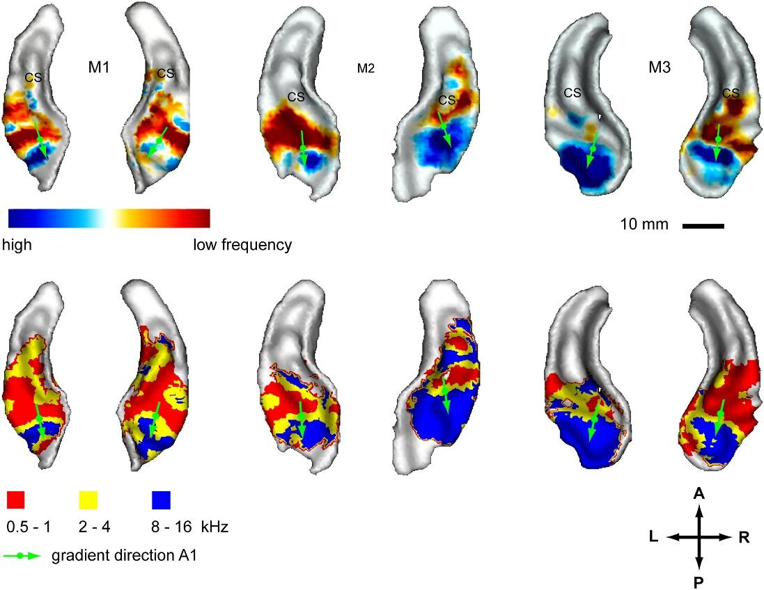Логика сознания. Часть 8. Пространственные карты коры мозга - 14