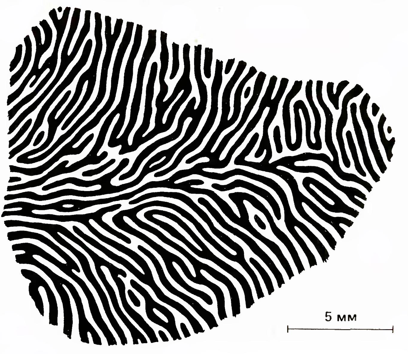 Логика сознания. Часть 8. Пространственные карты коры мозга - 4