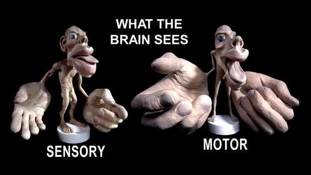Логика сознания. Часть 8. Пространственные карты коры мозга - 1