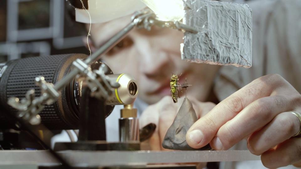 В Оксфордском музее собрали портреты насекомых из десятков тысяч макро-фотографий - 2