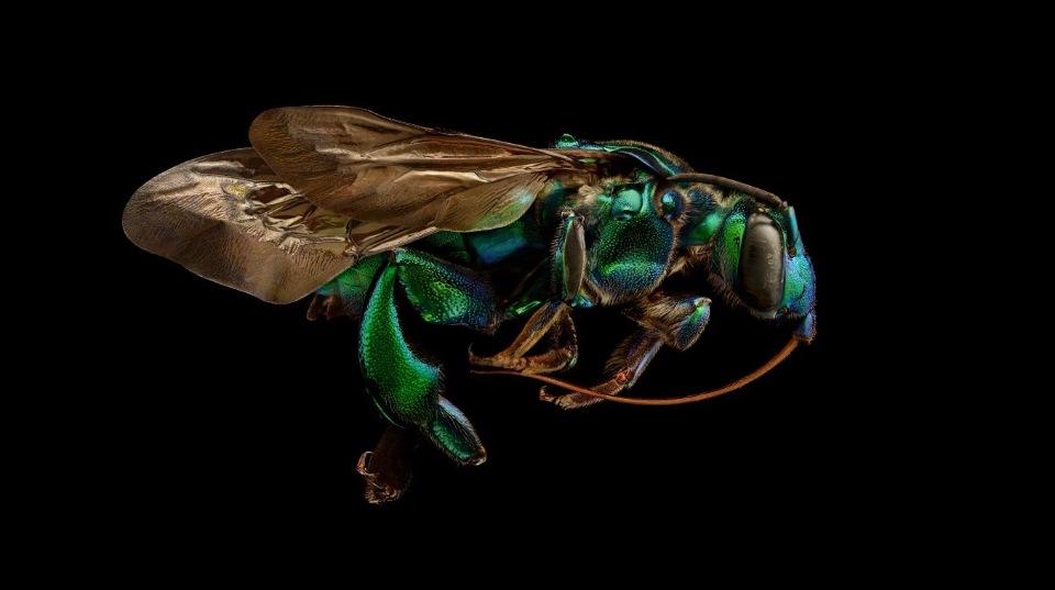 В Оксфордском музее собрали портреты насекомых из десятков тысяч макро-фотографий - 5