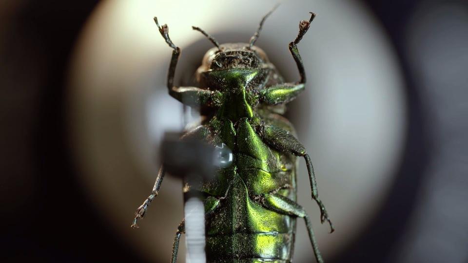 В Оксфордском музее собрали портреты насекомых из десятков тысяч макро-фотографий - 1