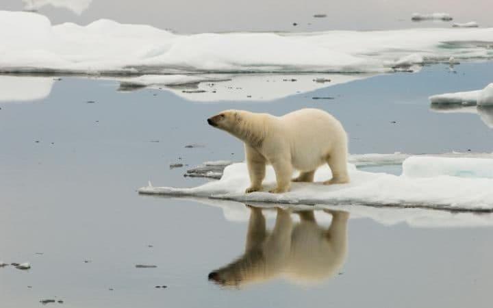 Эксперты предсказывали исчезновение арктического льда к сентябрю 2016 — и ошиблись - 6