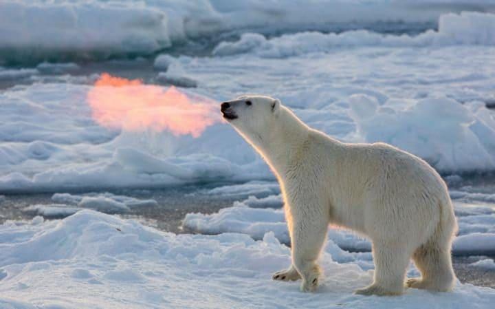 Эксперты предсказывали исчезновение арктического льда к сентябрю 2016 — и ошиблись - 1