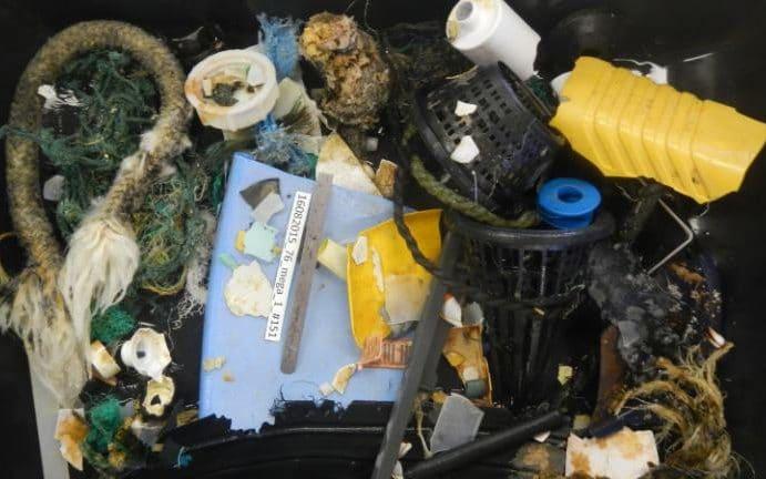 «Великое Тихоокеанское мусорное пятно» – это миф; наблюдения не обнаружили никакого «мусорного острова» - 4