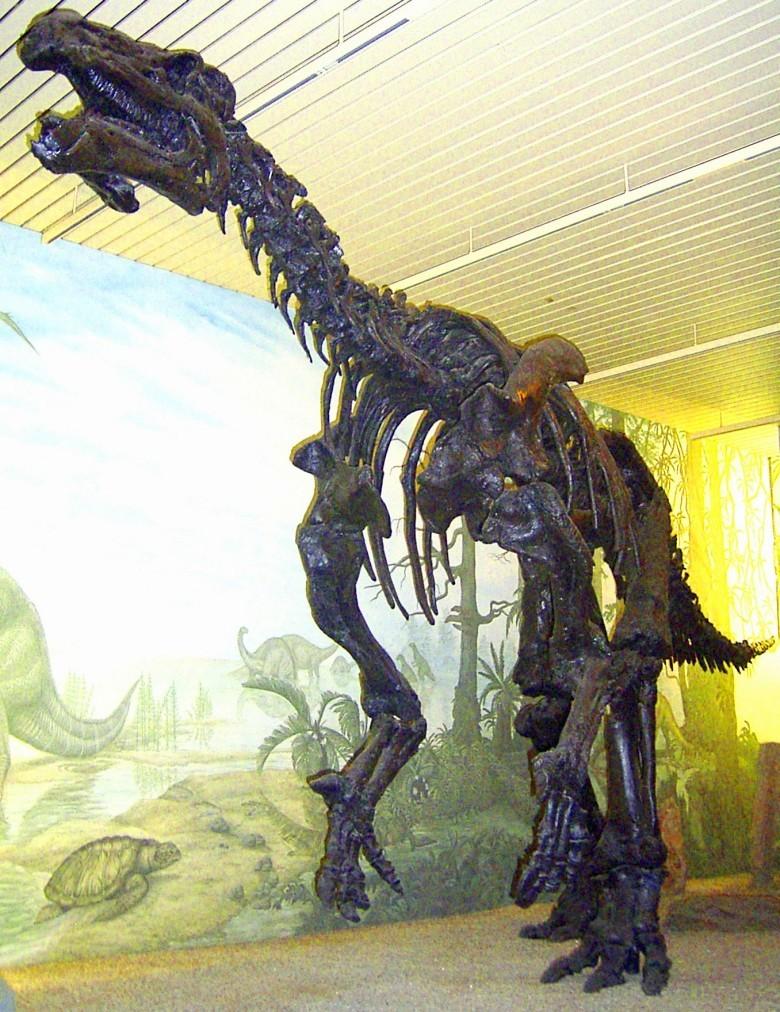 Динозавры могли быть умнее, чем принято считать. Окаменелый мозг игуанодонта изучили под микроскопом - 2