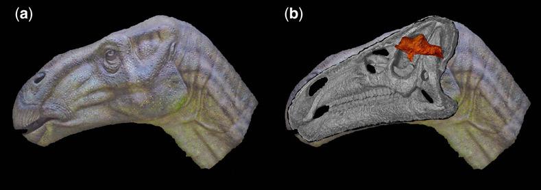 Динозавры могли быть умнее, чем принято считать. Окаменелый мозг игуанодонта изучили под микроскопом - 1