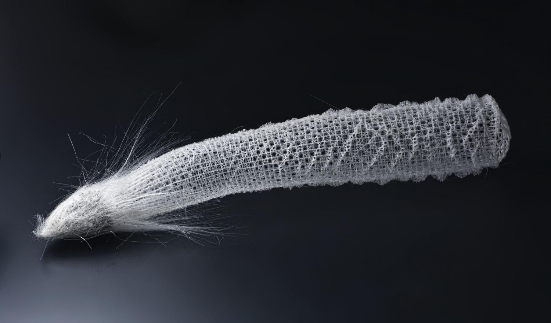 Физика в мире животных: морские губки и их «оптоволокно» - 4