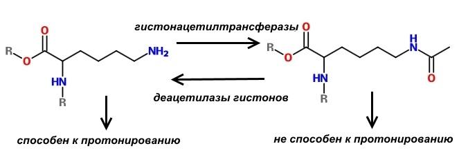 Фармакологическая модуляция памяти. Часть 2 - 6