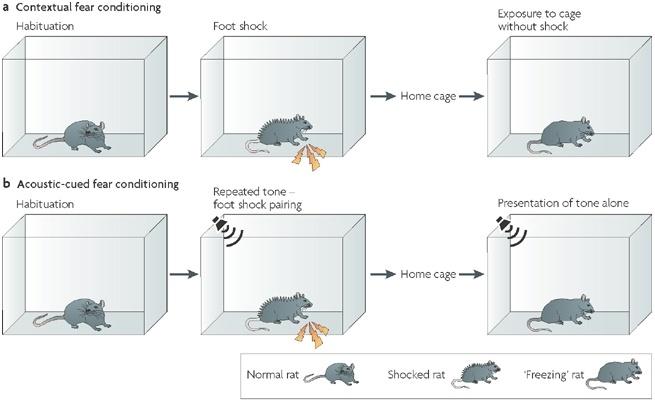 Фармакологическая модуляция памяти. Часть 2 - 8