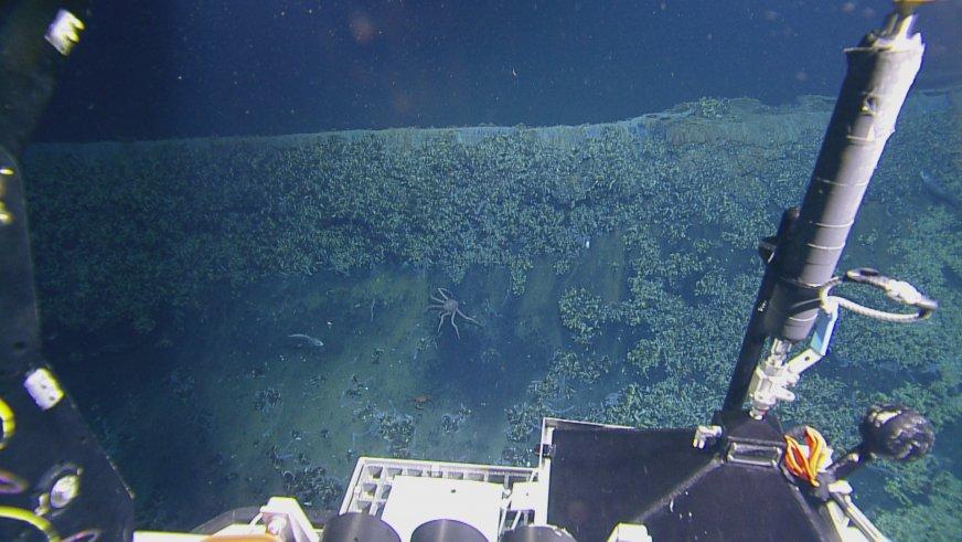 На дне Мексиканского залива нашли ядовитое озеро - 6