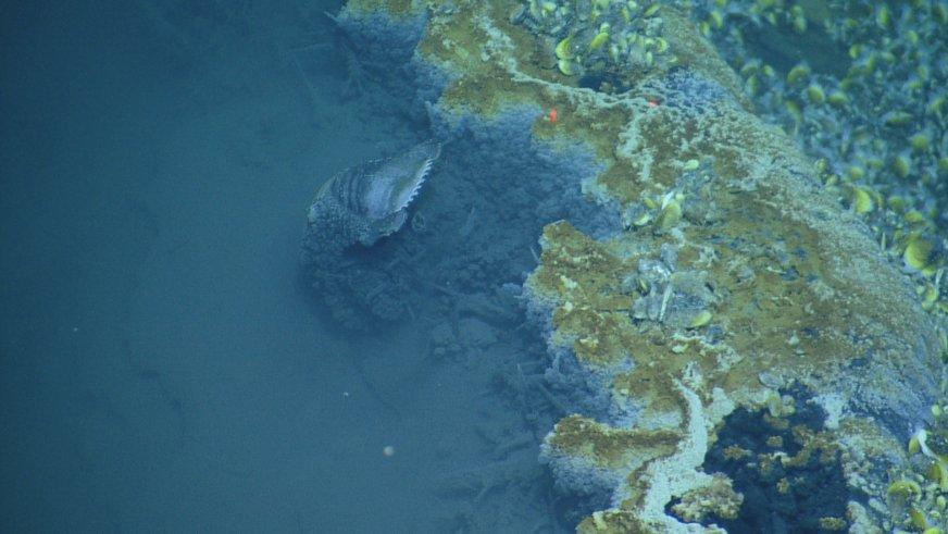 На дне Мексиканского залива нашли ядовитое озеро - 7