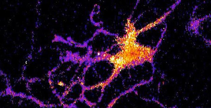Люминесценция помогает ученым изучать работу отдельных нейронов мозга животных - 2
