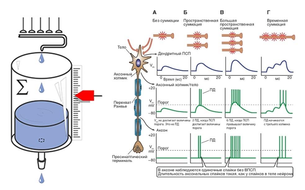 Код нейроэлемента - 2